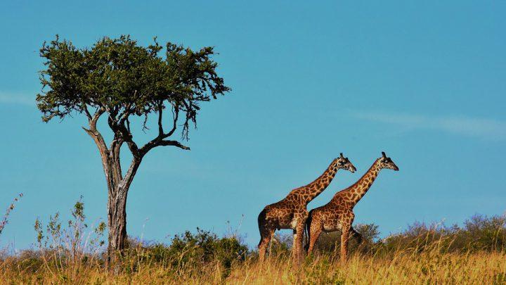 Bezoek het Serengeti national park